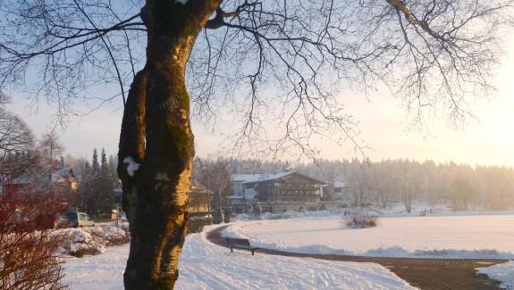 Winterimpressionen-im-Harz